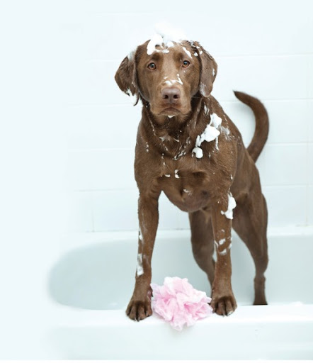 How Often Should I Give My Dog A Bath   Chelsea Dogs