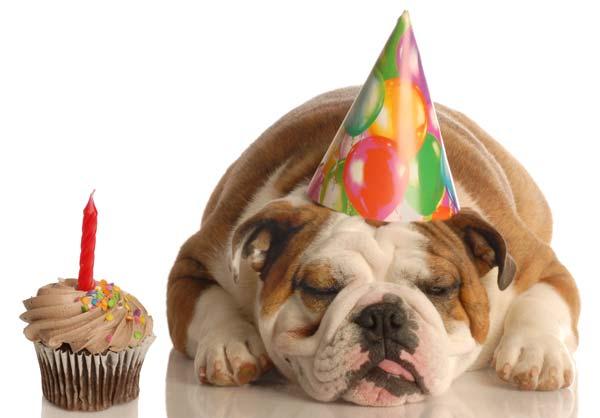 Happy Birthday Carlos! Bulldog-birthday