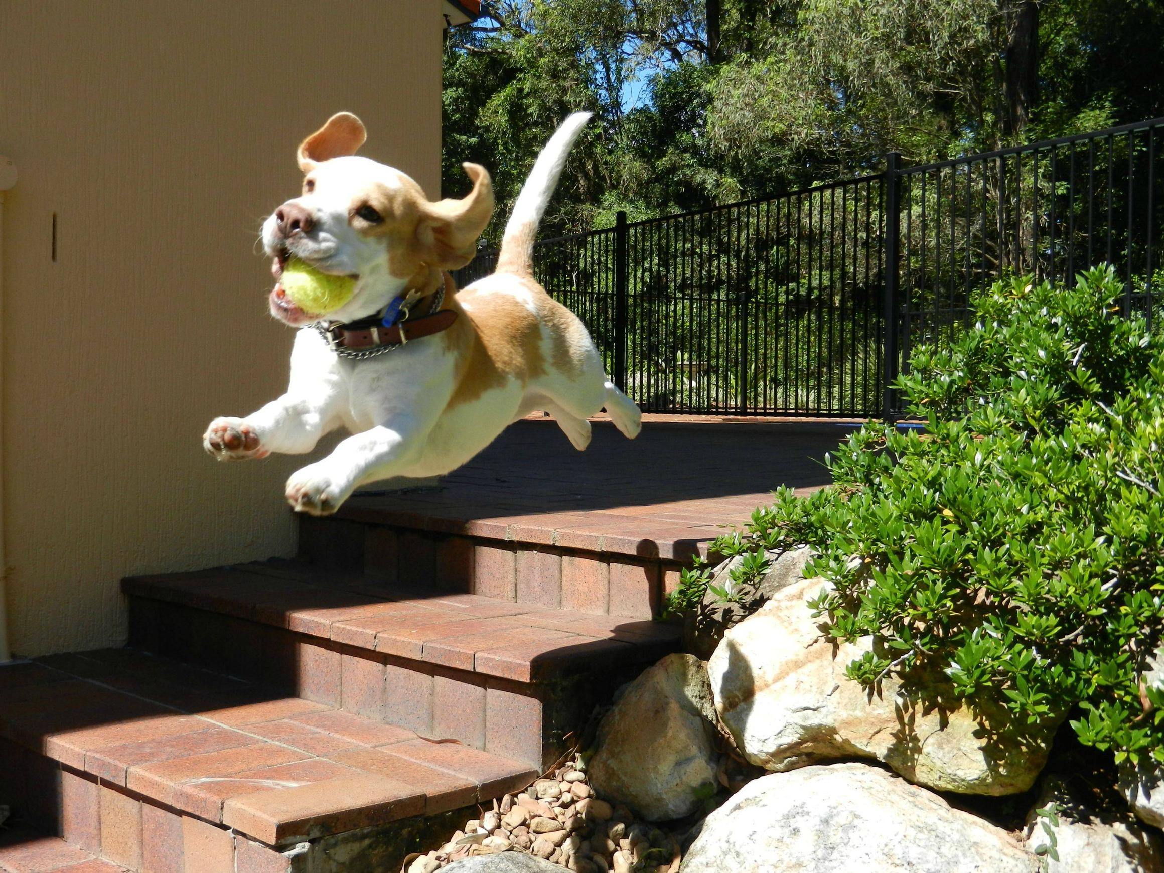 Image Gallery Happy Jumping Dog