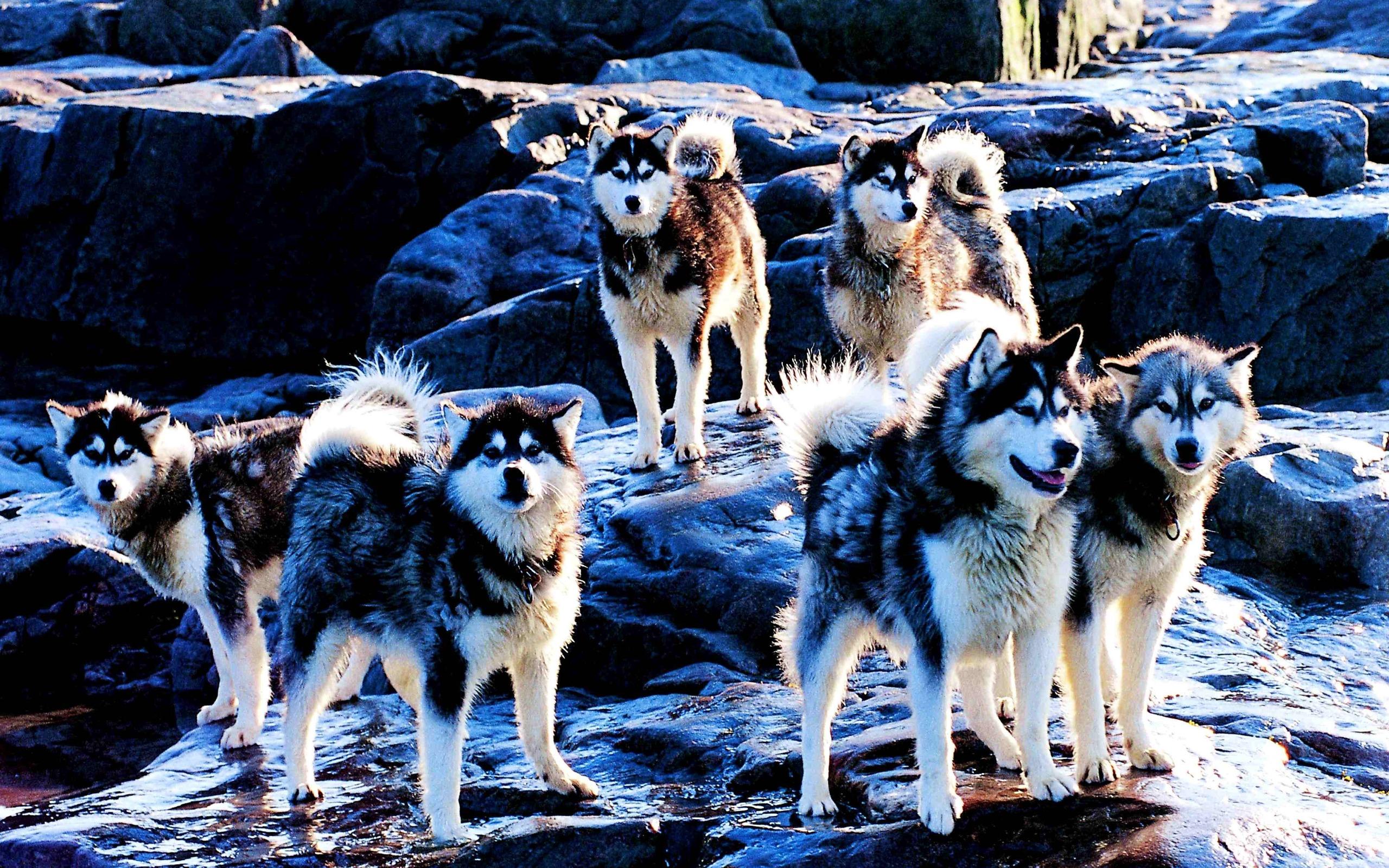 Canadian Indigenous Dog Breeds