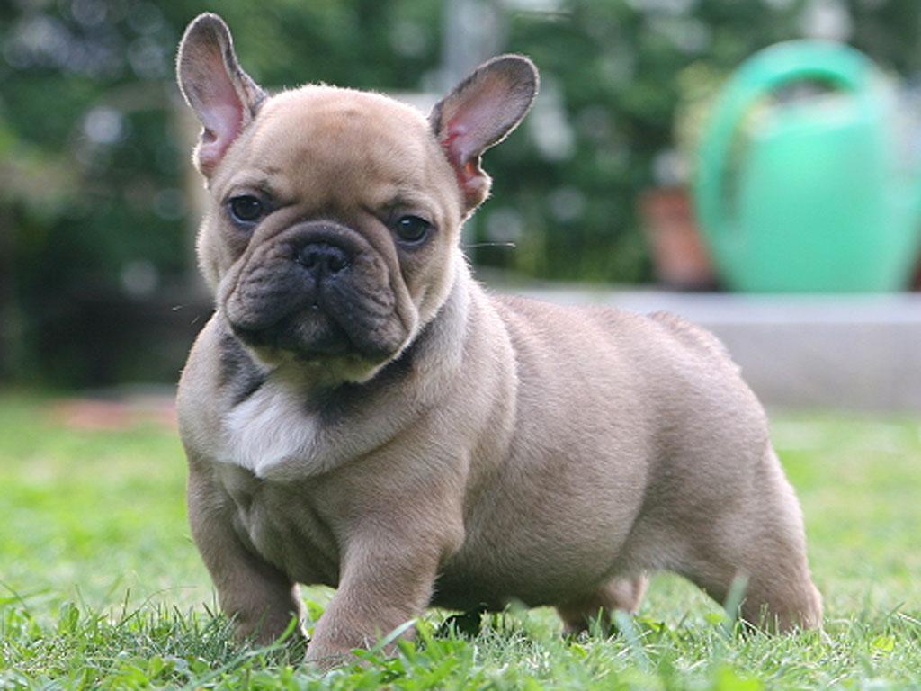 Top 10 Strangest Looking Dog Breeds Unique Looking Dog Breeds