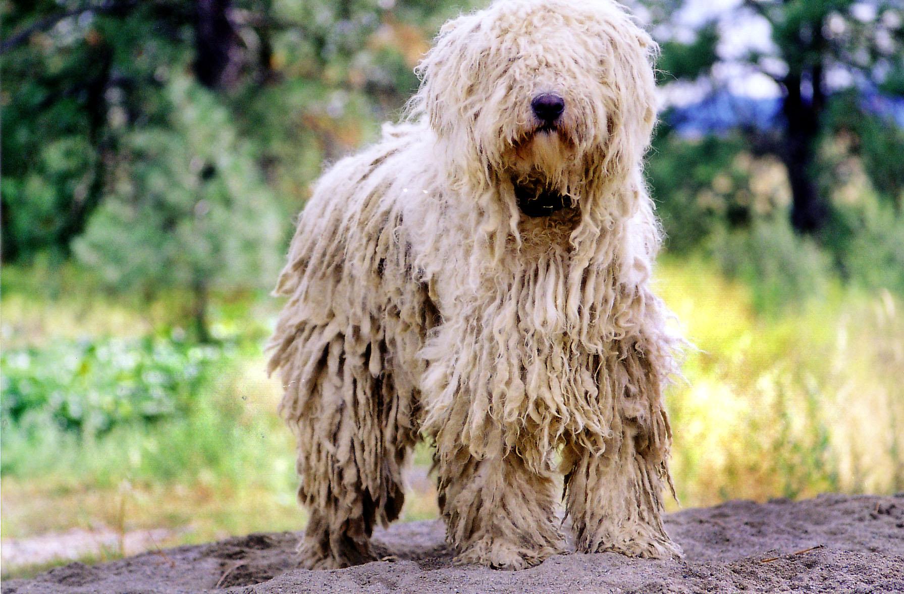 Top 10 Strangest Looking Dog Breeds