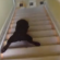 Adorable Chocolate Lab Puppy Slides Down Stairs