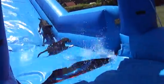 water slide dogs