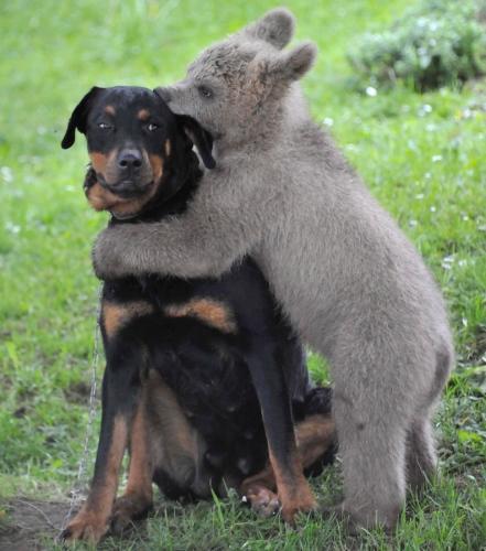 caringdog3