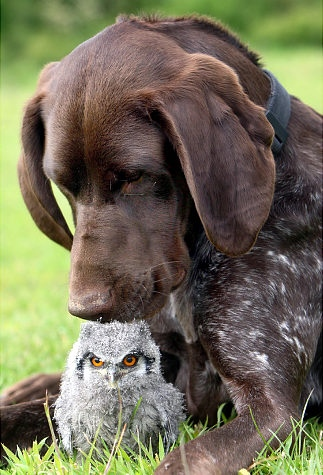 caringdogs6