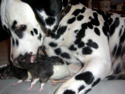 caringdogs8