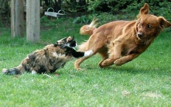 catdogpic