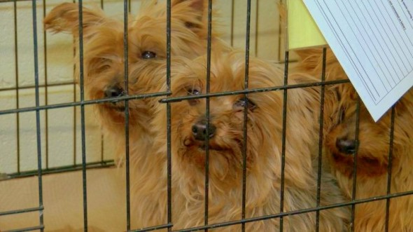 122 dogs rescued from freezing
