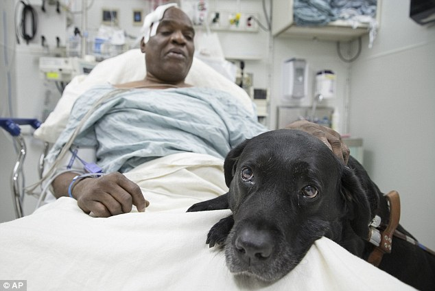 blind man saved by dog