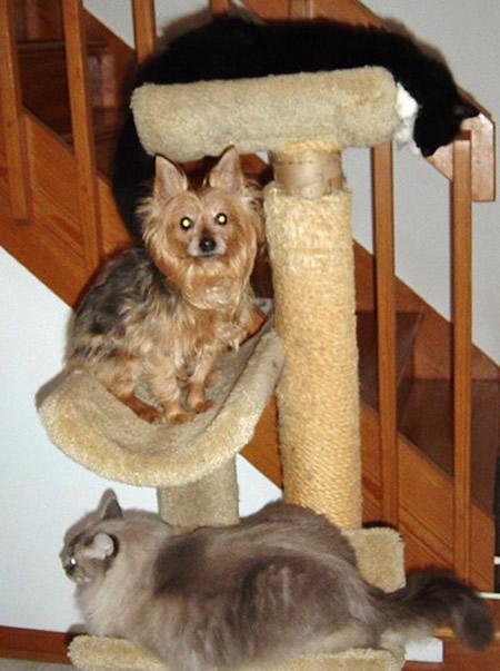 catspace3