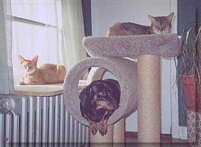 catspace7