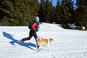 winterdog
