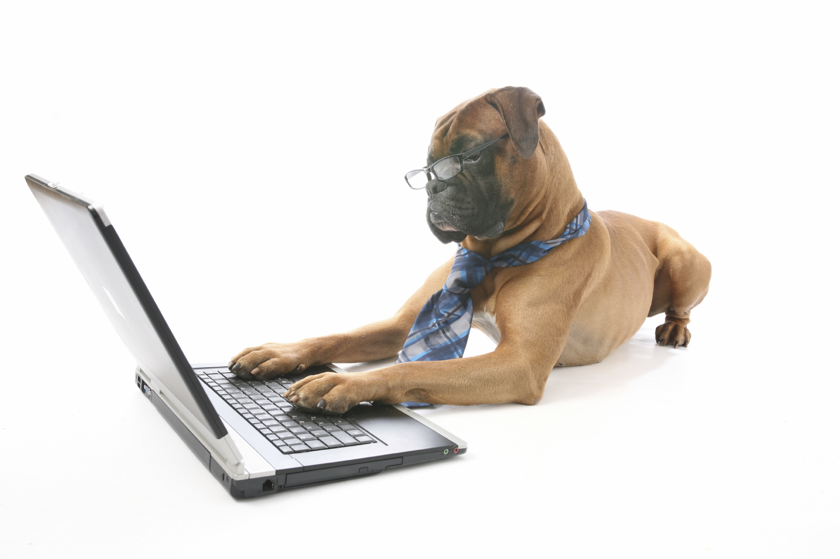 essay dog pet animal Nyu admission essay hugh gallagher essay on my favorite pet animal dog tips on writing a persuasive essay essay on my grandparents for class 1.