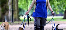 10 Ways to Spice up your dog walk
