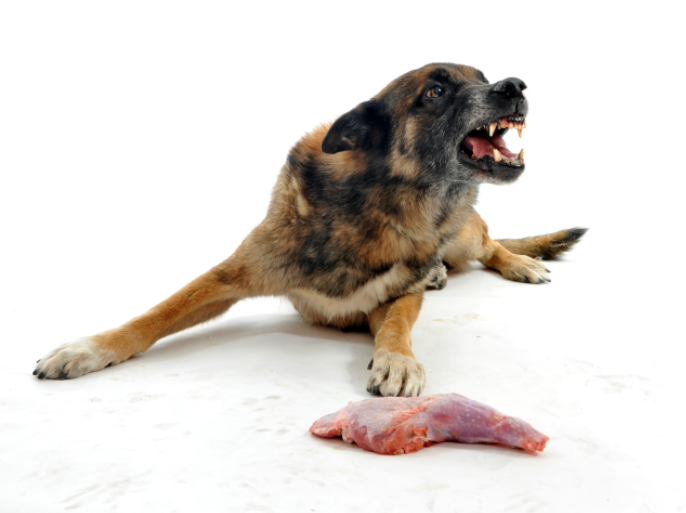 Rescue Dog Food Aggression