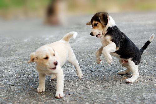 When Can My Puppy Socialise With Other Dogs