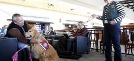 Easing Airline Anxiety | How Dogs Help Travellers