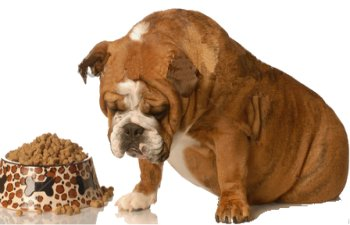 What Can A Dog Eat When They Have Diarrhea