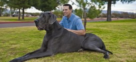 Training Tips for Large Dogs