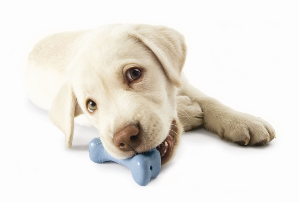 Happy Dog With Toy Dog Toys