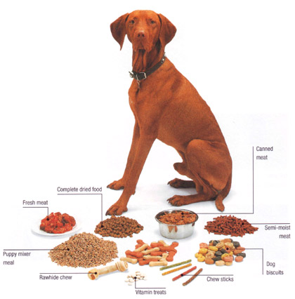 Feeding Dog Human Food Diet