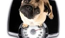 Top Ten Ways To Help Your Dog Lose Weight