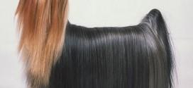 Dog Hair vs. Dog Fur