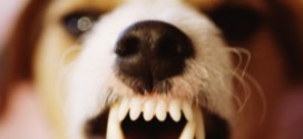 How To Stop Your Dog From Growling And Snapping