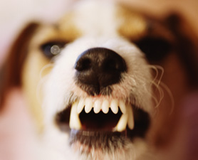 how to stop puppy biting and growling