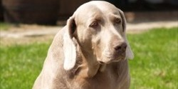 Urinary Tract Infections in Canines | Causes and Treatments