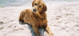 15 Dog Breeds That Love To Swim