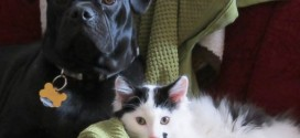 Dog Saved the Life of a Newborn Kitten