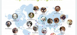The Top Trending Dog Breeds