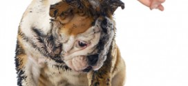 Common Canine Behaviours
