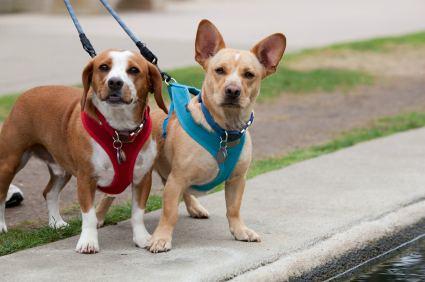 Dog Hill Walking Harness