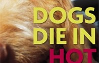 Dog's Die In Hot Cars | Don't Cook Your Dog