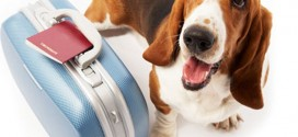 Pet Travel: Essentials For Travelling With Your Dog
