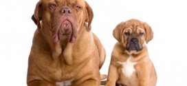 Should I Get A Puppy Or Adult Dog?