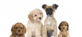 The top UK dog breeds and their attributes