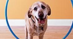 Training An Unresponsive Dog