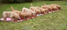 Top Tips For Weaning Puppies