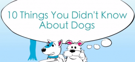 10 Facts You Didn't Know About Dogs