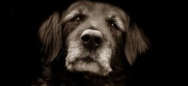 Normal Changes in Aging Dogs