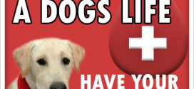 Canine Blood Donations