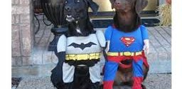 Canine Halloween Costumes!