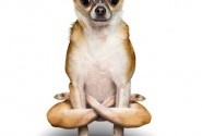 Doga: do or don't?