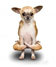 Credit: Dan and Alejandra Borris for Yoga Dogs calendar