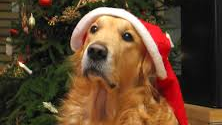 Top 5 Christmas gifts for the dog lover in your life
