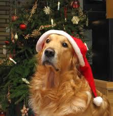 dogchristmas